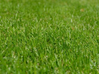 Garten- & Landschaftspflege